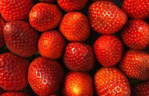 sumber fitonutrisi merah