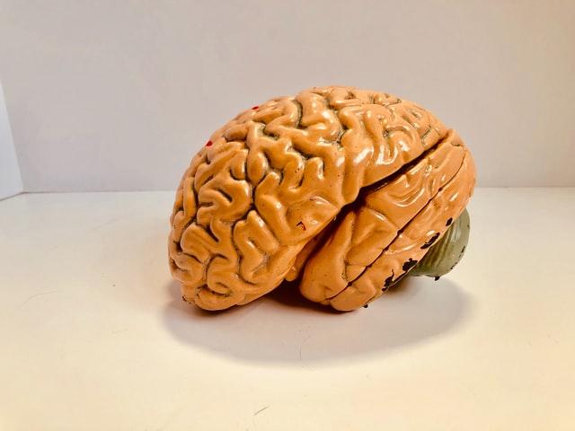 demensia otak karena junk food